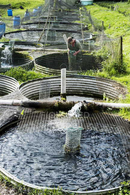 High angle view of man in waders working at water tanks at fish farm. — Stock Photo