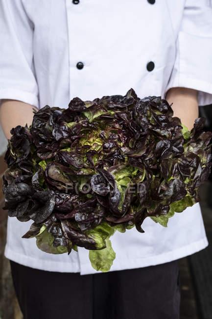 Midsection жіночого кухаря тримає пучок зеленого і фіолетового салату. — стокове фото