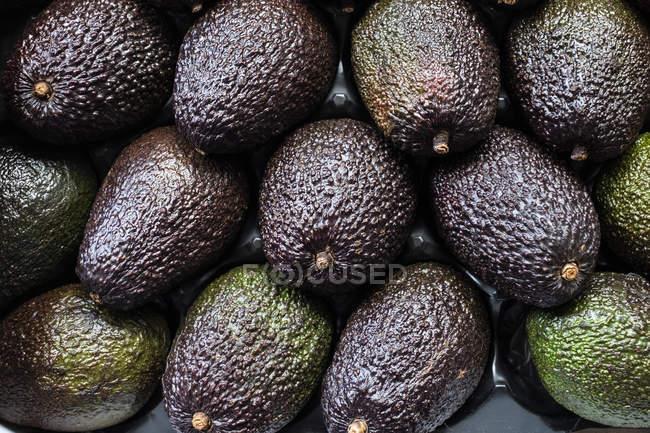 Полный каркас крупным планом свежих фиолетовых и зеленых фруктов авокадо. — стоковое фото