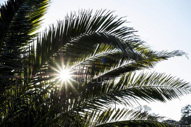 Крупный план солнечного света, пронизывающего листья пальмы . — стоковое фото