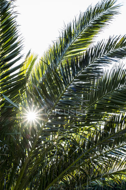 Close-up of sunlight filtering through  leaves of palm tree. — Stock Photo