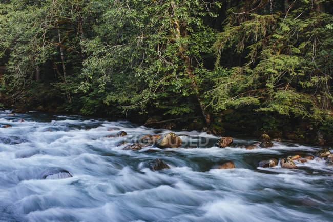 Río que fluye a través de la exuberante selva templada en Mount Baker, Washington, EE. UU. - foto de stock