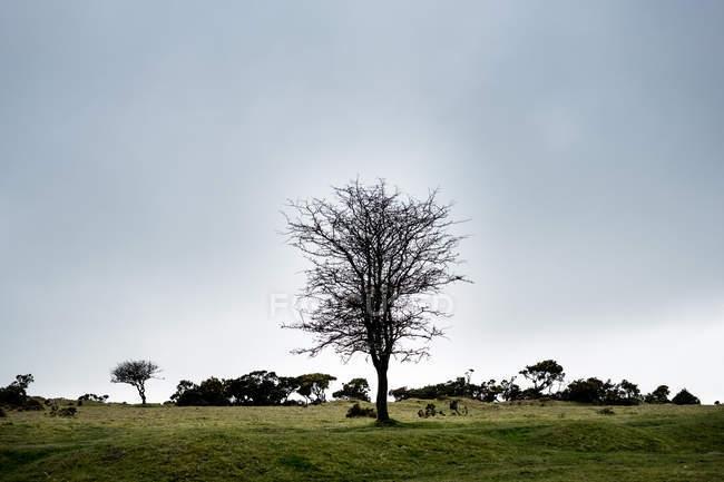Landscape with single tree under cloudy sky, Cornwall, England, United Kingdom. — Stock Photo