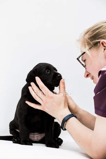 Primo piano di donna bionda esaminando cucciolo labrador nero . — Foto stock