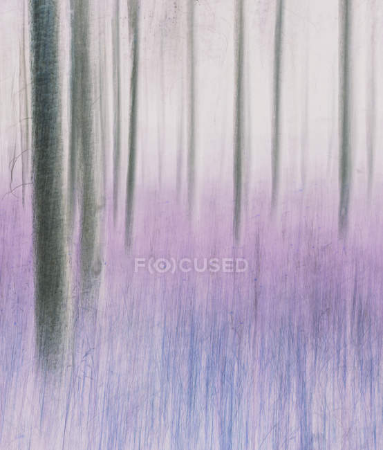 Blurred motion abstract of lodgepole pine forest and meadow. — Stock Photo