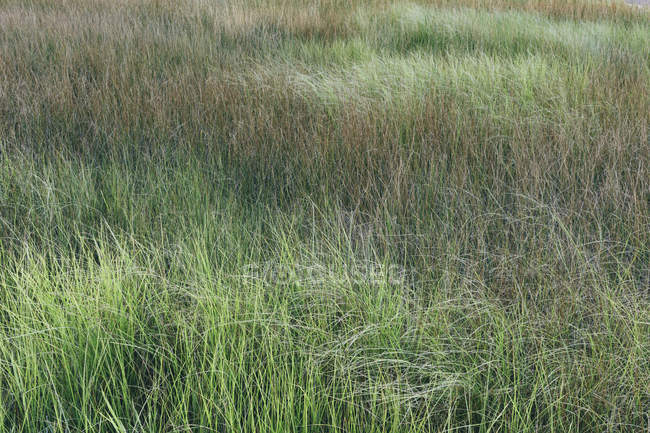 Marsh and lush green grass growth in summer. — Stock Photo