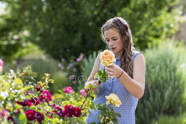 Blonde adolescente organiser des roses du jardin formel . — Photo de stock