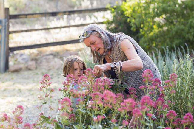Großmutter und kleiner Enkel schneiden Rosen im Garten. — Stockfoto