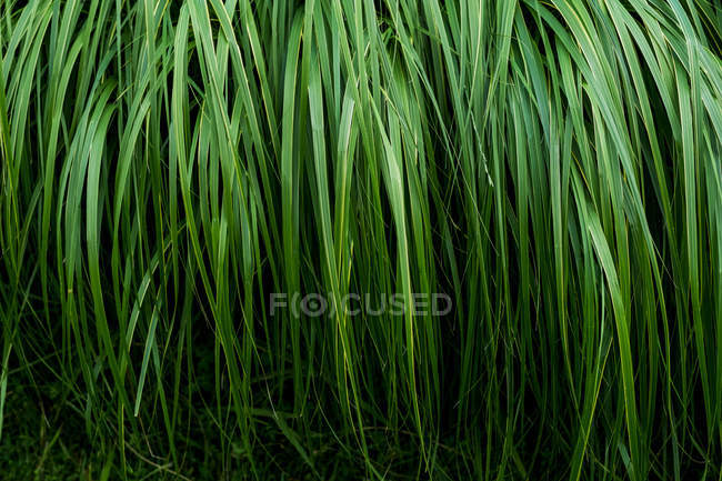 Close-up of lush green grass blades, full frame. — Stock Photo