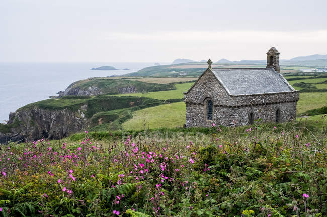 Розовые цветы и St Non Chapel and Holy Well, St Davids, Pembrokeshire coast, Wales, UK . — стоковое фото