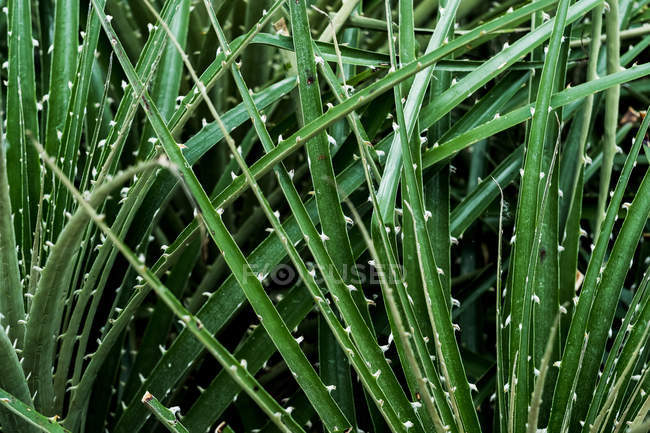 Close-up of spiky green leaves blades of plants. — Stock Photo