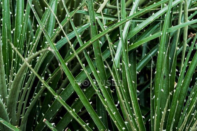 Nahaufnahme von stacheligen grünen Blättern von Pflanzen. — Stockfoto