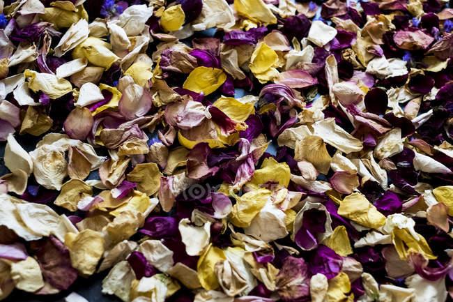 Primer plano en ángulo alto de pétalos de flores secas en marco completo . - foto de stock