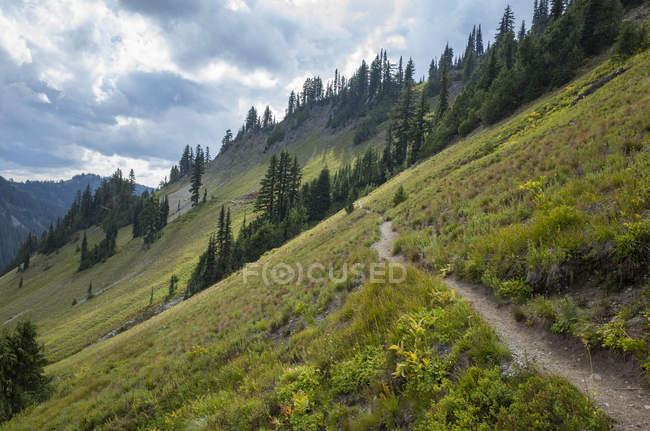 Pacific Crest Trail in Feline Meadow, Goat Rocks Wilderness, Gifford Pinchot National Forest, Washington, Usa — стоковое фото