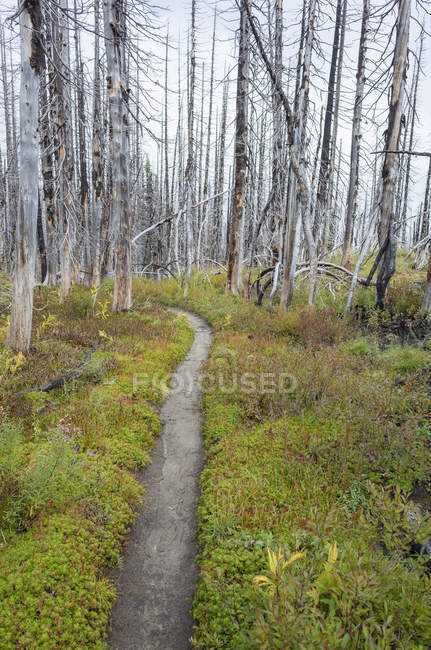 Feuer auf dem Pacific Crest Trail beschädigte subalpinen Wald, Mount Adams Wilderness, Gifford Pinchot National Forest, Washington, USA — Stockfoto