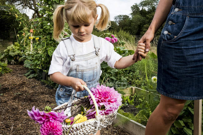 Girl holding basket with pink Dahlias walking hand in hand with woman through garden. — Stock Photo