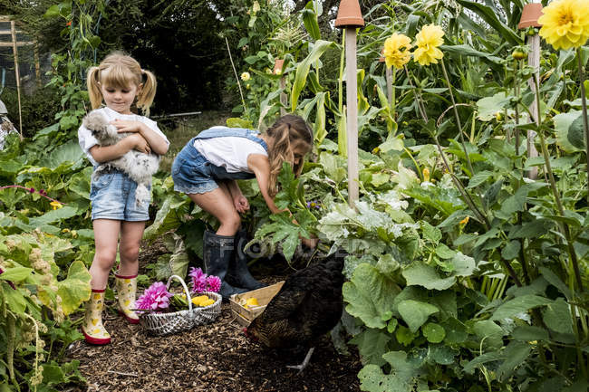Two girls standing in garden, holding chickens and picking vegetables. — Stock Photo