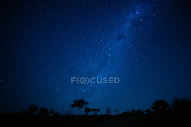 Landscape at night with silhouetted trees under stars of Milky Way in Africa. — Stock Photo