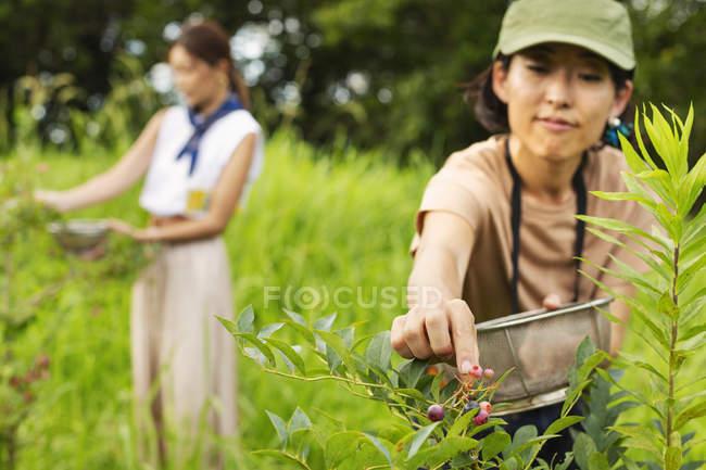 Deux femmes japonaises cueillant des baies dans un champ vert . — Photo de stock