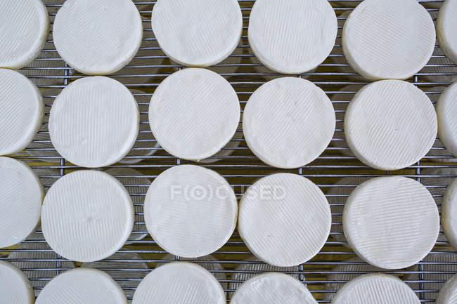 Gros plan à angle élevé sur la fabrication du fromage, le séchage du fromage Camembert en entreposage frais sur des supports métalliques. — Photo de stock