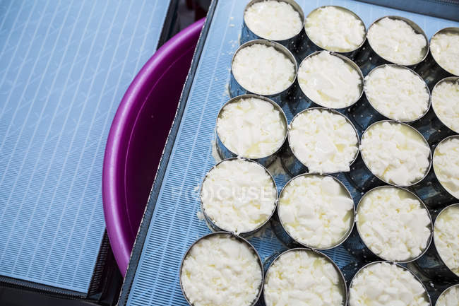 Gros plan à angle élevé de la fabrication du fromage, découpage du fromage Camembert en moules. — Photo de stock