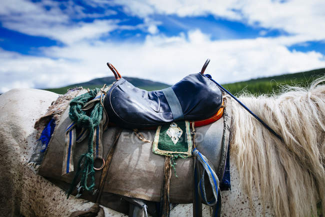 Close-up of saddle on white horse against cloudy sky in mountains of Northern Mongolia. — Stock Photo