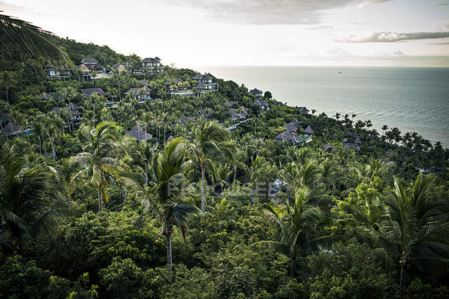 Scenery across dense forest and coconut trees with ocean in distance, Koh Samui, Thailand — Stock Photo