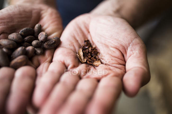 High angle close-up hands holding crushed and roasted cocoa beans. — Stock Photo