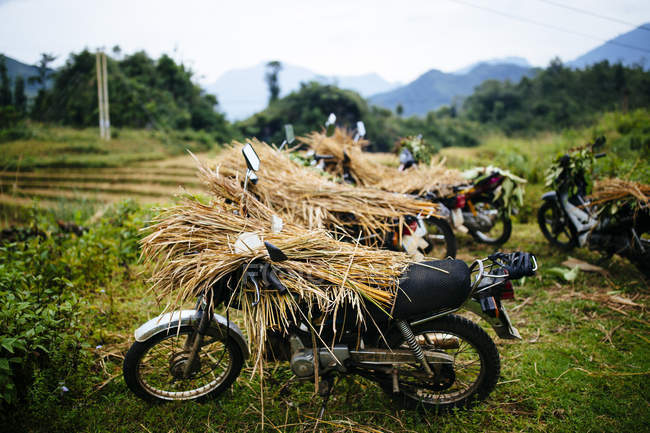 Motorbikes laden with rice stalks in northern mountains of Vietnam. — Stock Photo