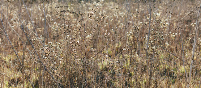 Field of dry grasses and wildflowers — Photo de stock
