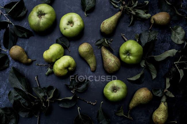 Alto ángulo de cerca de peras verdes y manzanas Bramley sobre fondo negro . - foto de stock