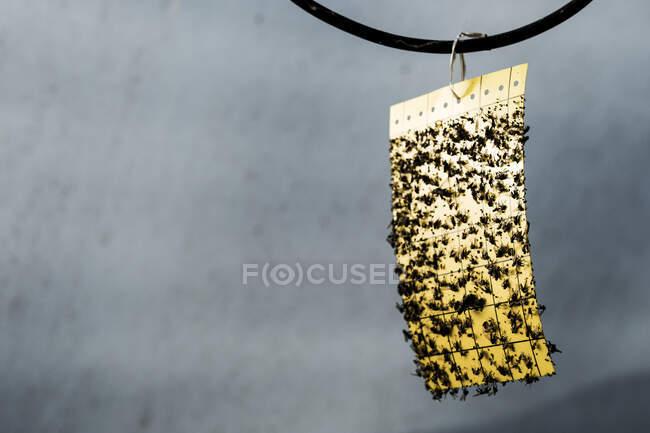 Cierre de pinzas amarillas cubiertas de insectos muertos. - foto de stock