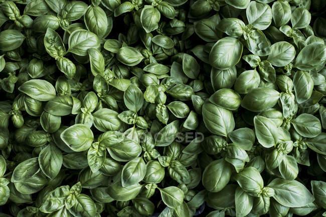 Высокоугольный крупный план свежего зеленого цвета, полный вид на кадр — стоковое фото