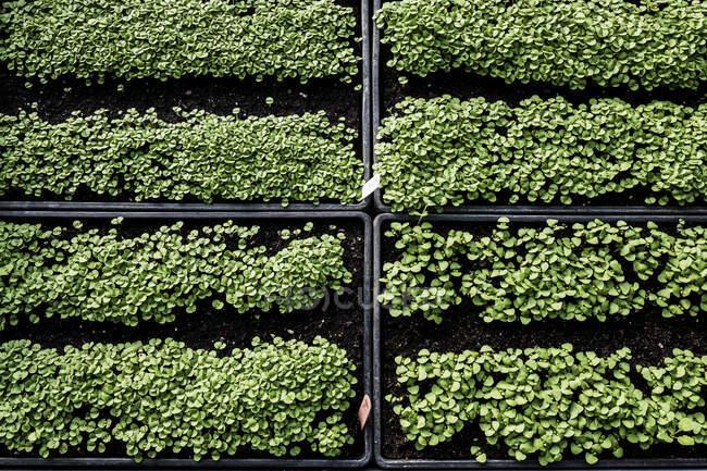Gros plan à angle élevé des caisses avec une sélection de semis fraîchement plantés . — Photo de stock