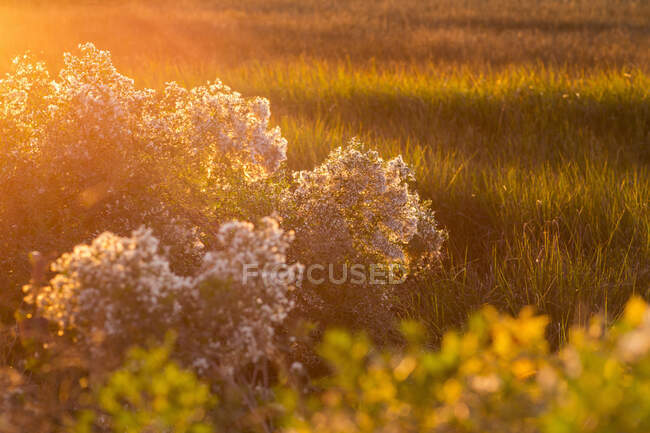 View across the salt marshes and wildlife reserve on a coastal island. — Stock Photo