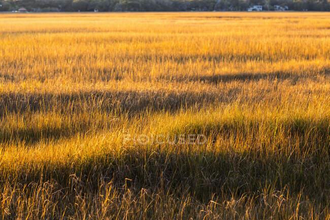 View across the salt marsh and wildlife reserve on a coastal island. — Stock Photo
