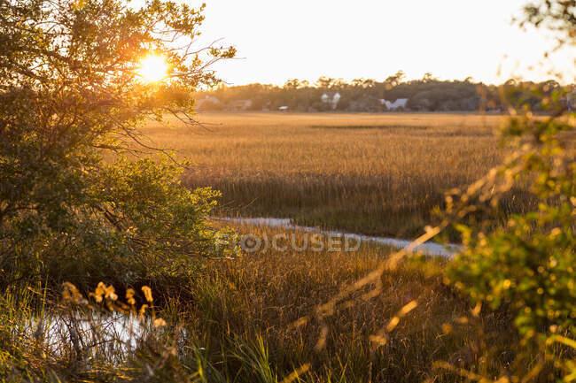 Vista attraverso le paludi salate e la riserva naturale su un'isola costiera . — Foto stock
