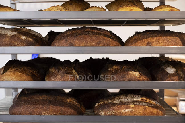 Close up of freshly baked loaves of bread on trolley shelves in an artisan bakery. — Stock Photo