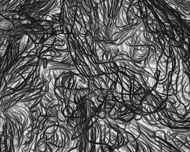 Image inversée en noir et blanc de filets et cordes commerciaux sur un quai de pêche . — Photo de stock