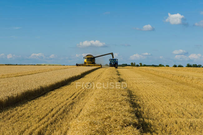 Combine harvester and tractor harvesting a crop in a field in summer. — стокове фото