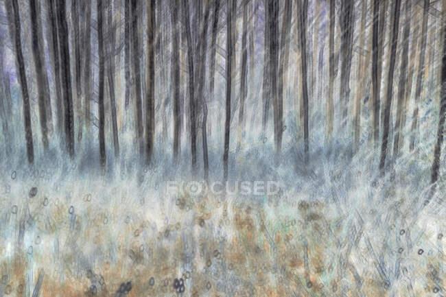 Розмитий осиковий ліс і луг поблизу Лівенворта (Вашингтон). — стокове фото