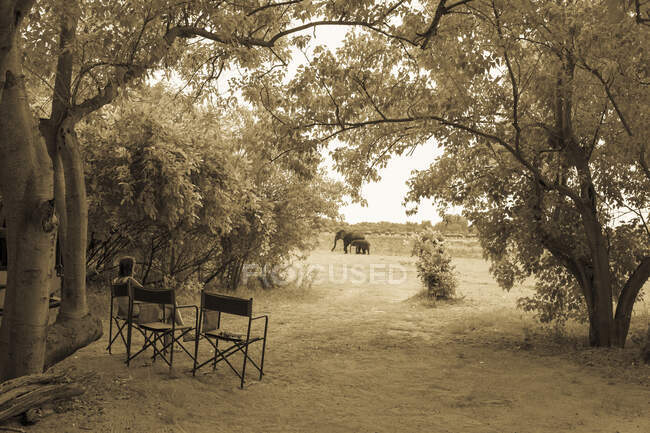 Woman looking at elephants, Moremi Reserve, Botswana — Stock Photo