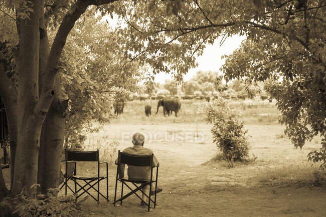 Hombre mayor en una silla observando un grupo de elefantes cerca. - foto de stock