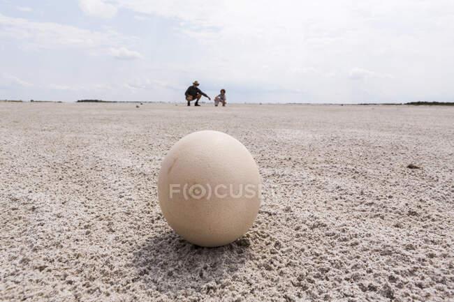 Закрыть страусиное яйцо, Nxai Pan, Ботсвана — стоковое фото