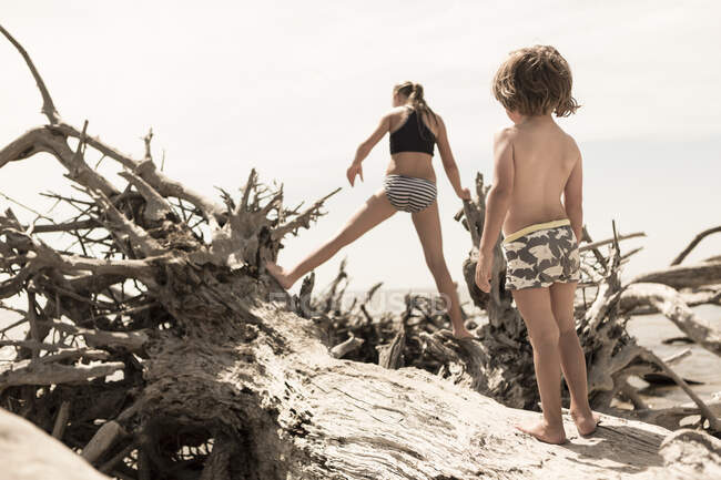 Brother and sister climbing on giant driftwood tree. — Stock Photo