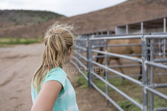 Дівчинка - підліток, яка дивиться на коня на паддоку. — стокове фото