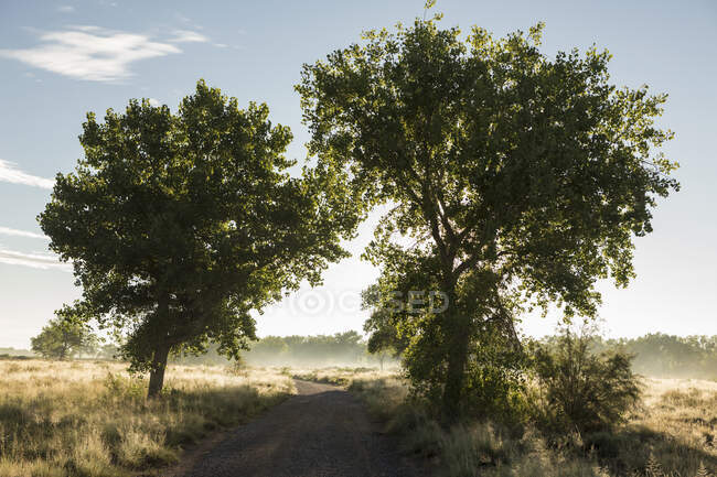 Trees and country road at sunrise — Stock Photo