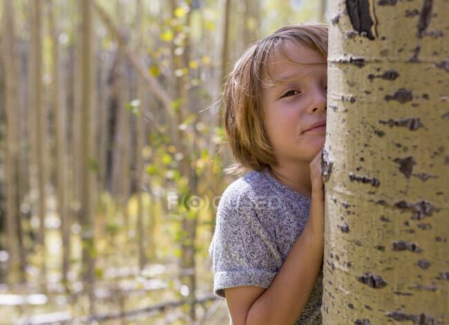 Retrato de niño de 4 años escondido detrás de un árbol de álamo - foto de stock