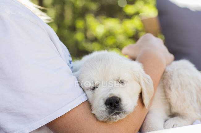6 year old boy holding an English golden retriever puppy — Stock Photo