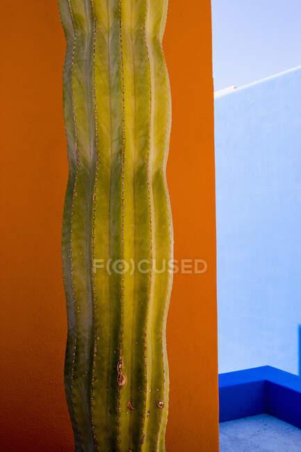 Vue rapprochée de la plante de cactus contre un mur orange — Photo de stock
